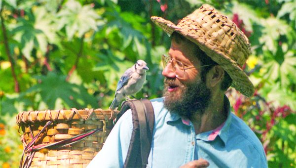 Doug Elliott in his garden with a Blue Jay on his shoulder. (photo submitted by Pam Torlina)