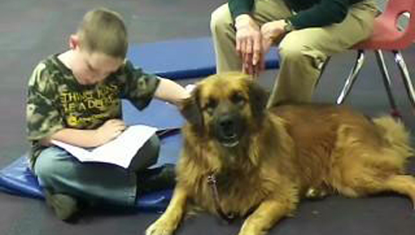 FHS provides therapy dogs for kids to read to. (photo submitted)