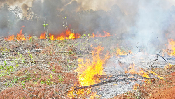 A previous prescribed burn held in Polk County. (photo submitted by Carrie Knox)