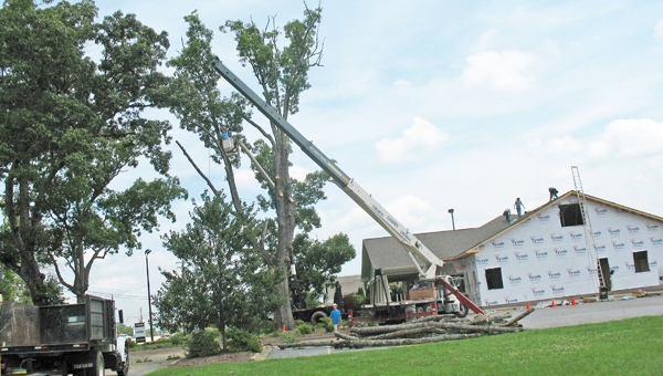 Both construction and tree removal crews were busy doing their work, Friday Aug. 2 at Woodcreek Dental of Landrum on Hwy. 14.  JB Trees of Landrum attracted a lot of attention with the removal of a huge tree.  With continuous vehicle traffic, safety was apparent.  Woodcreek Dental is also undergoing an expansion. (photo submitted by Anne Regan)