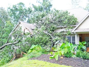 A tree fell on this Blackbird Ln. house located off Red Fox Rd. in Columbus, during a Friday, Aug. 23 storm that brought heavy rains and winds. (photo submitted by the Polk County Emergency Services).