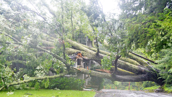 A tree fell on this home at 186 Melrose Ave. Wednesday morning.