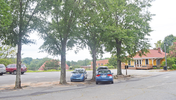Several trees in the Depot Plaza of Tryon might have to be removed during the renovation process of the plaza's parking lot. (photo by Samantha Hurst)