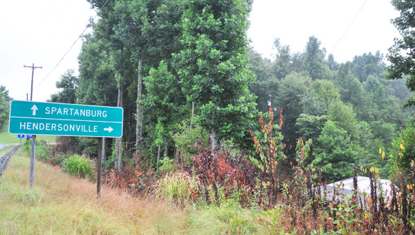Plants along Holbert Cove Rd. in Saluda were sprayed with herbicide earlier this year. (photos by Mark Schmerling)