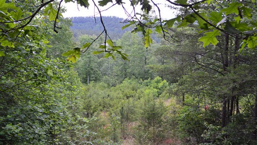 This stretch of land purchased by the Carolina Mountain Land Conservancy continues for 155 acres. It is the other portion of the 586 acres the CMLC and PCCF bought and divided. The PCCF acquired 431 acres on the other side South Wilson Hill Road in Mill Spring. (photo by Michael O'Hearn)
